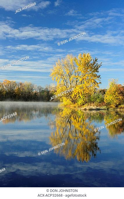 Sugar maple in autumn, reflected in the Vermilion River. Greater Sudbury, Ontario, Canada