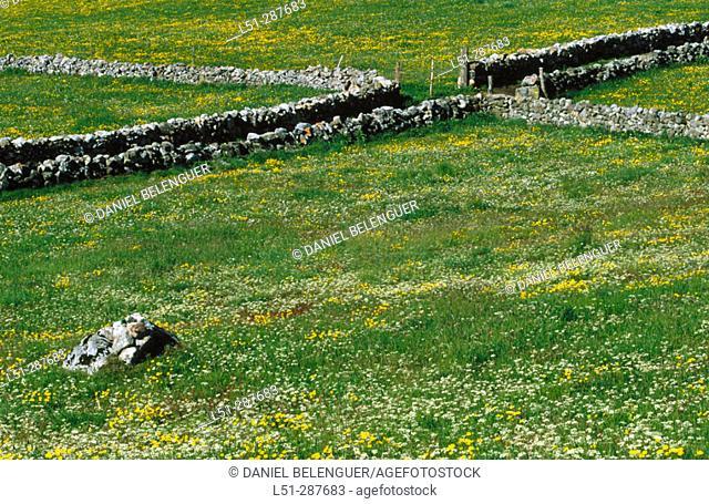 Meadows in spring. Santa María del Puerto, Somiedo Natural Park. Asturias, Spain