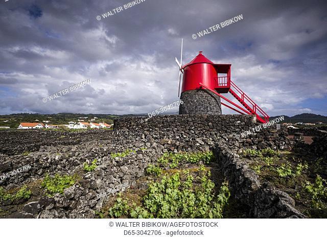 Portugal, Azores, Pico Island, Criacao Velha, Moinho do Frade, traditional windmill in volcanic vineyards