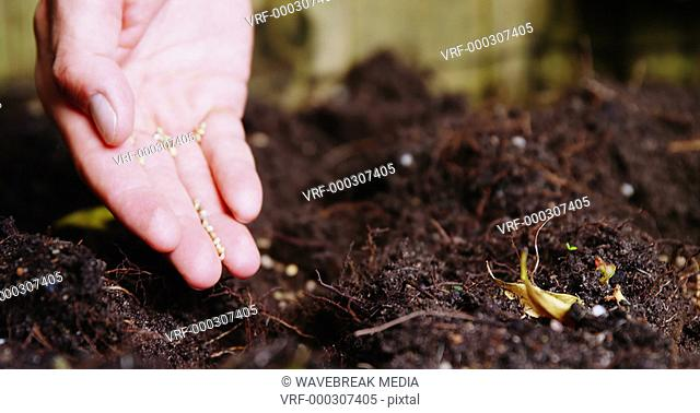 Man planting saplings in soil