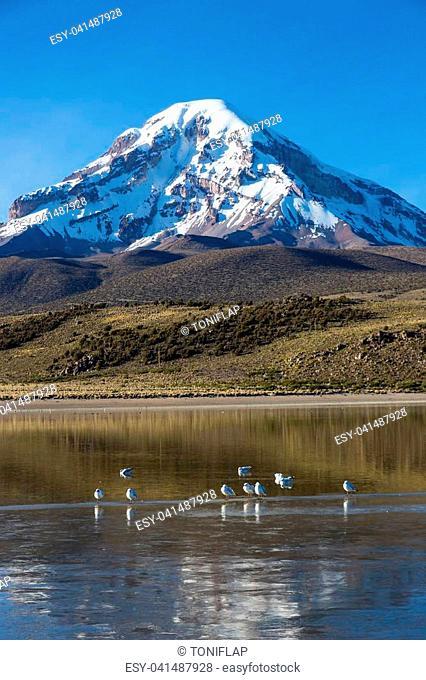 Sajama volcano and lake Huayñacota, in the Natural Park of Sajama. Bolivia