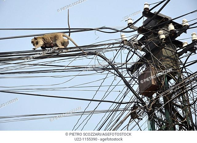 Phnom Penh (Cambodia): a monkey walking on the electricity wires