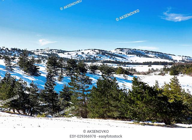Forest on the top of mountain Ai-Petri, Yalta Municipality, Crimea, Russia. Snow, frosted trees in sunny winter day