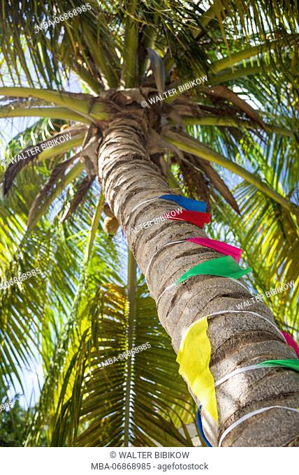 British Virgin Islands, Anegada, Setting Point, palm tree with flags