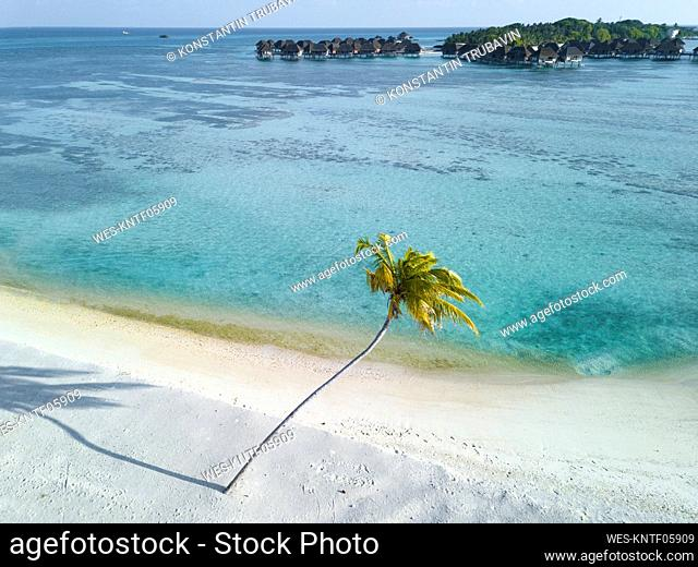 Single palm tree on tropical island with bundalows in background, aerial view