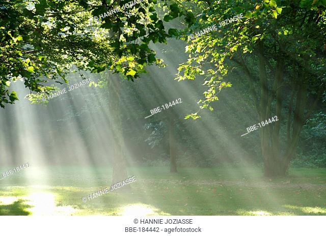 Sunrays between the trees and leaves in the late summer