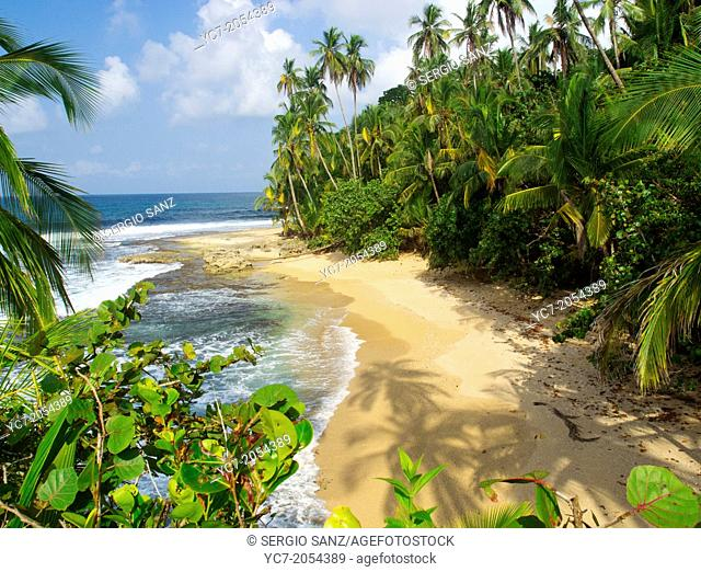 Caribbean sea beach Costa Rica