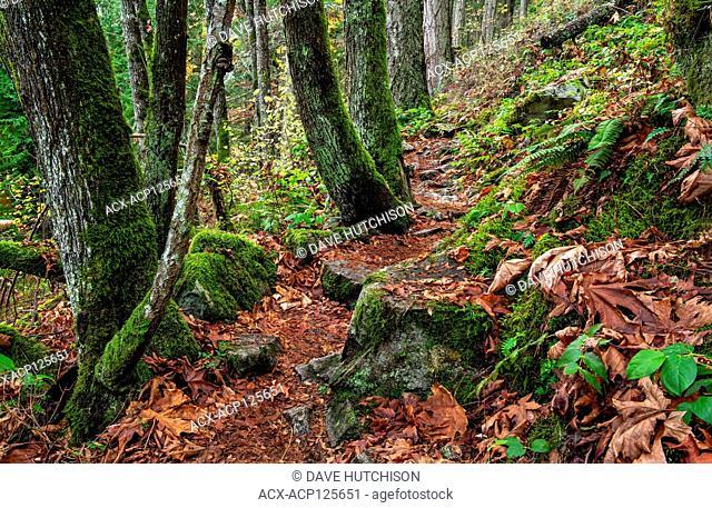 Autumn at John Dean Provincial Park, North Saanich, Vancouver Island, BC Canada