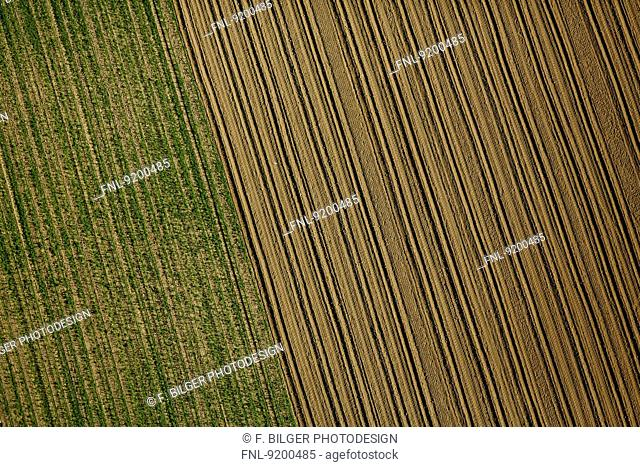 Green and brown field, Baden-Wuerttemberg, Germany, aerial photo