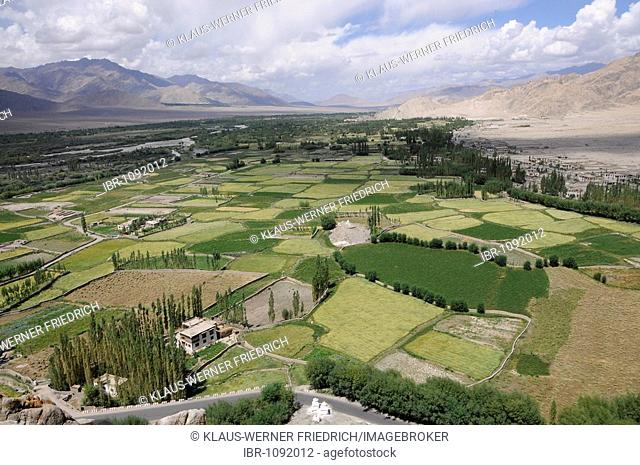 Thikse Monastery, aerial picture of Indus Valley, river oasis with barley fields, irrigation, farms and mountainous desert, Ladakh, Jammu and Kashmir