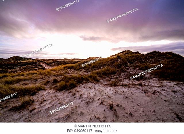 Coastal dunes with vegetation in an atmospheric moody sunset landscape under a purple sky on Amrum in the North Frisian Islands