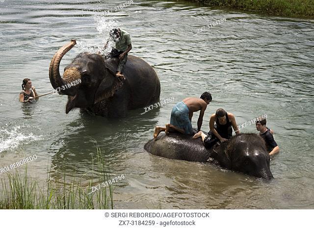 Elephant's bath with tourists, Rapti River, Chitwan National Park, Nepal
