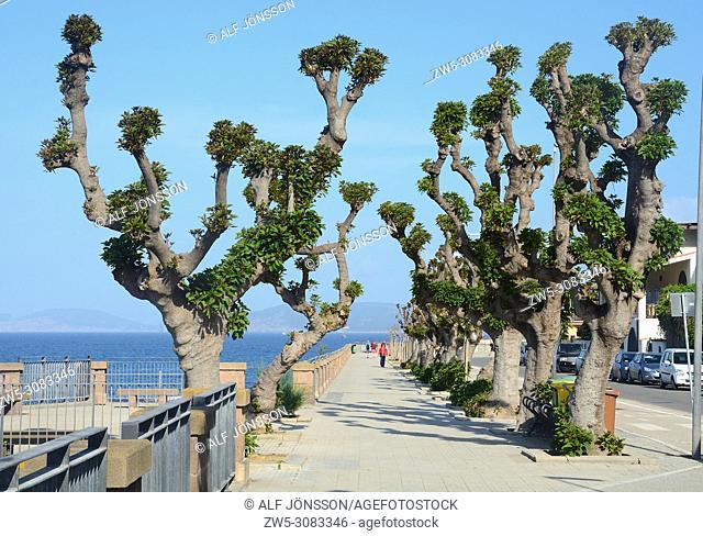 The Promenade with platan trees in Alghero, Sardinia, Italy