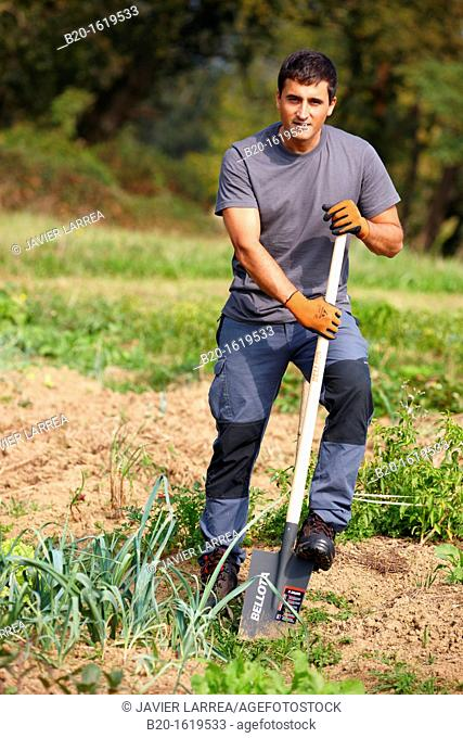 Farmer digging and turning the soil with a shovel, Agricultural and gardening hand tool, Usurbil, Gipuzkoa, Basque Country, Spain