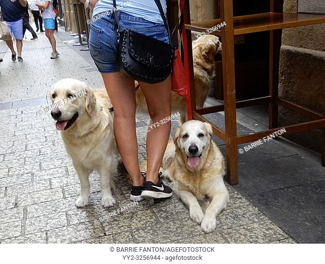 Woman With Three Golden Retrievers, San Sebastián, Spain