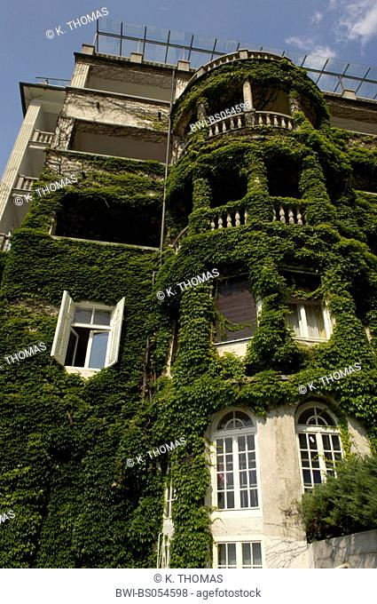 old house, overgrown with clamberer, Slovenia, Northern Slovenia, Bled