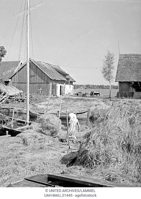 Im Dorf Loye im Memeldelta in Ostpreußen, 1930er Jahre. In the village Loye in the Memel delta, East Prussia, 1930s