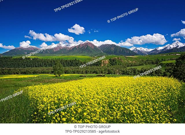 beauty of Qilian