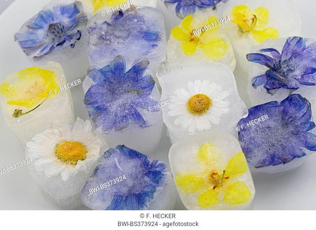blossom ice cubes, flavoured with eatable blossoms