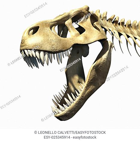 T-Rex skull close-up. On black background. Clipping path included