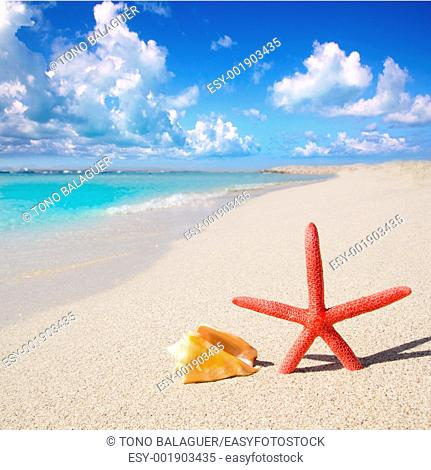 beach starfish and seashell on white sand of Formentera Illetes