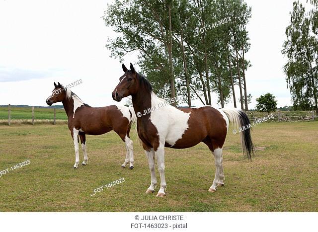 Full length of horses standing on grassy field