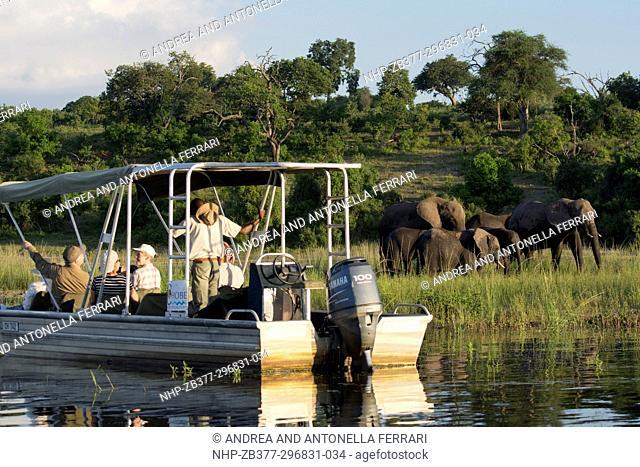 River boat safari, Chobe river, Chobe National Park, Botswana