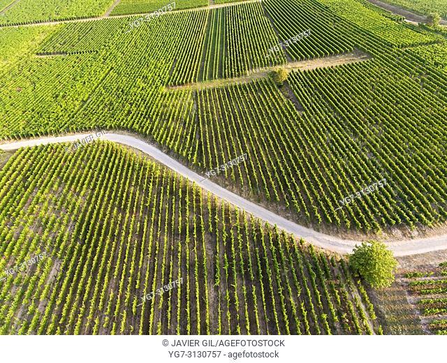 Vineyards in Eguisheim, Haut-Rhin, Grand Est, France