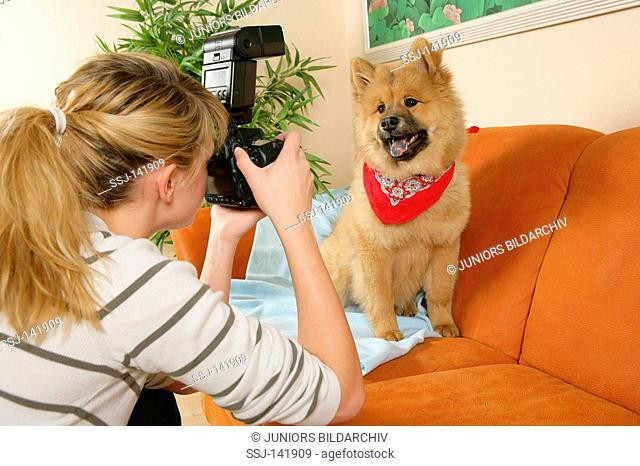 woman taking a picture of a young Eurasier