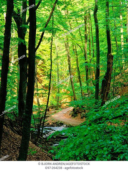 Path in beech wood. Skane. Sweden