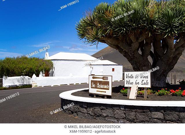 Vineyard. La Geria region. Lanzarote, Canary Islands, Atlantic Ocean, Spain