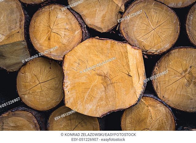 Wood logs in Jasenna village in Zlin Region, Moravia in Czech Republic