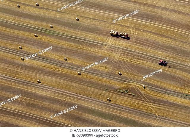 Aerial view, harvested corn field, tractor collecting straw bales, moraine