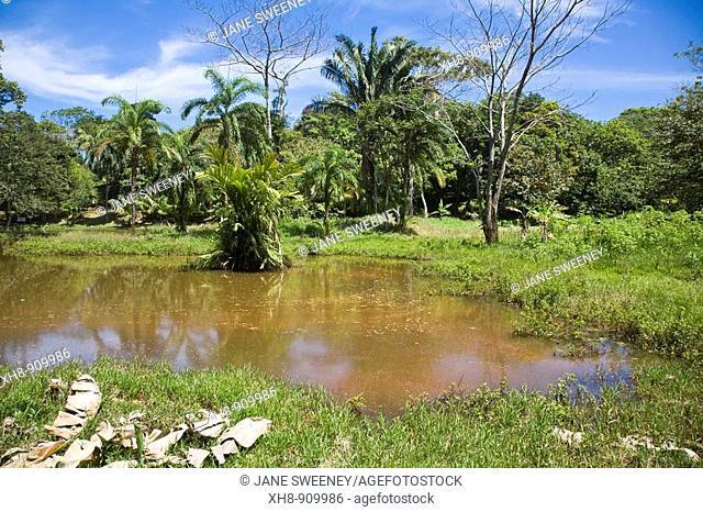Interior of Bastimentos Island, Bocas del Toro Province, Panama