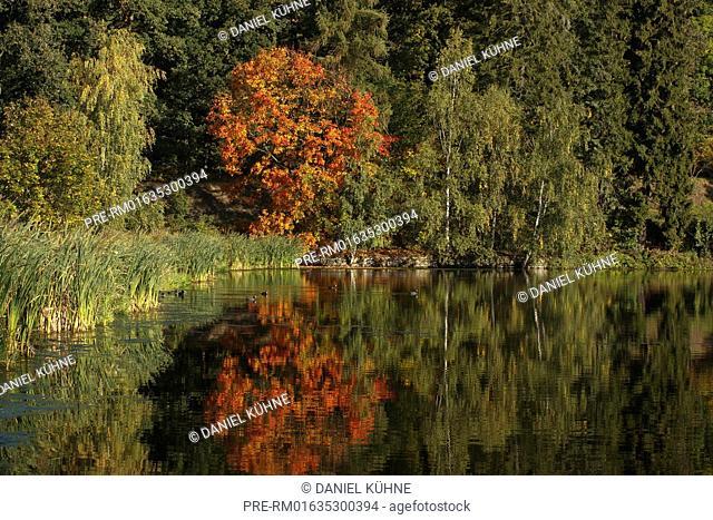 Lake, Harz District, Harz, Saxony-Anhalt, Germany / See, Landkreis Harz, Harz, Sachsen-Anhalt, Deutschland