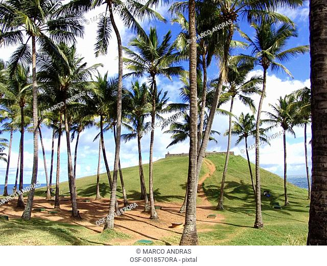salvador palm trees in a hill on the beach