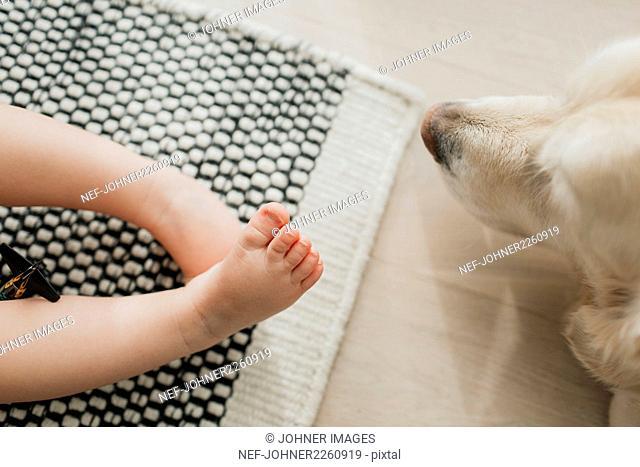 Kids feet and golden retriever