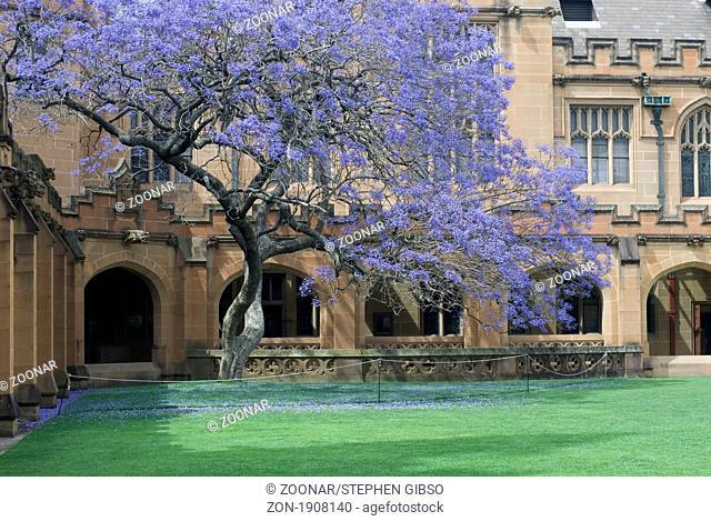 gothic revival architecture at sydney university, australia