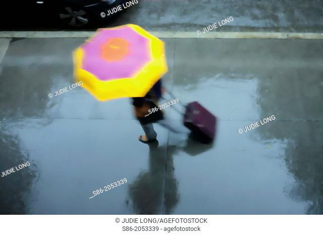 Woman Holding a Pink and Yellow Umbrella, Wheeling a Carry-on Suitcase, Rushing Down a Rainswept Street, Partial View of a Passing Car on the Top Left