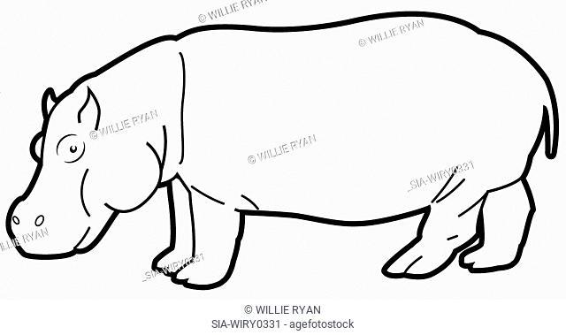 Hippopotamus on white background