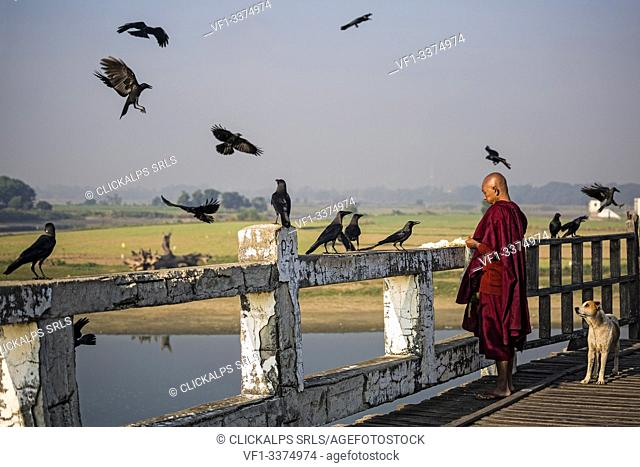 Monk feeds crows on U-Bein Bridge, Amarapura, Mandalay, Myanmar, Southeast Asia
