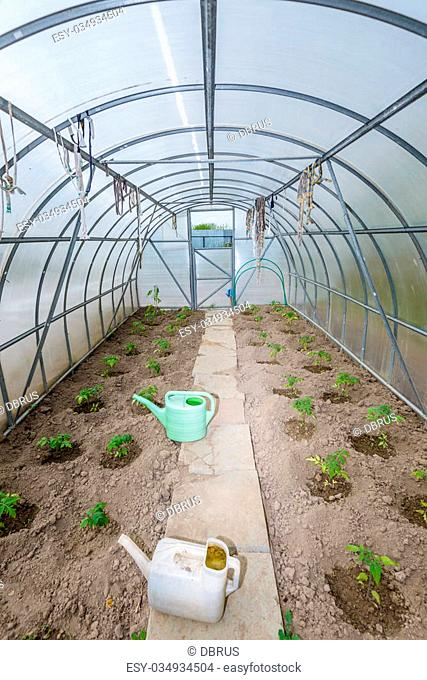 the arch of the greenhouse tomato seedlings in early spring