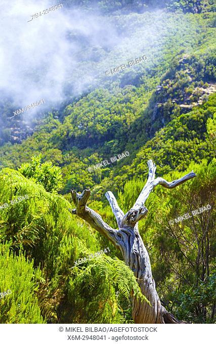Mountain landscape. Levada das 25 Fontes route. Madeira, Portugal, Europe