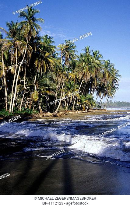 Tropical beach with palm trees, national park, Parque Nacional Cahuita on the Caribbean coast, Caribbean, Costa Rica, Central America