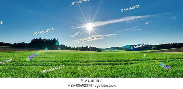 HDR panorama, landscape, sun, field