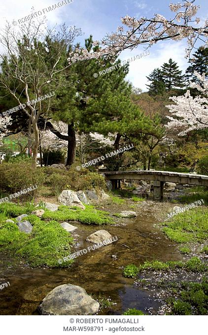 cherry blossom season. Maruyama-koen park, Kyoto, Japan