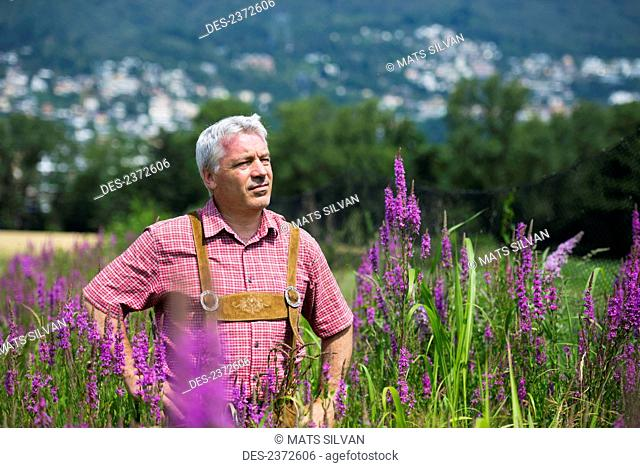 A Man Stands Proudly In A Field Of Blossoming Purple Flowers; Locarno, Ticino, Switzerland