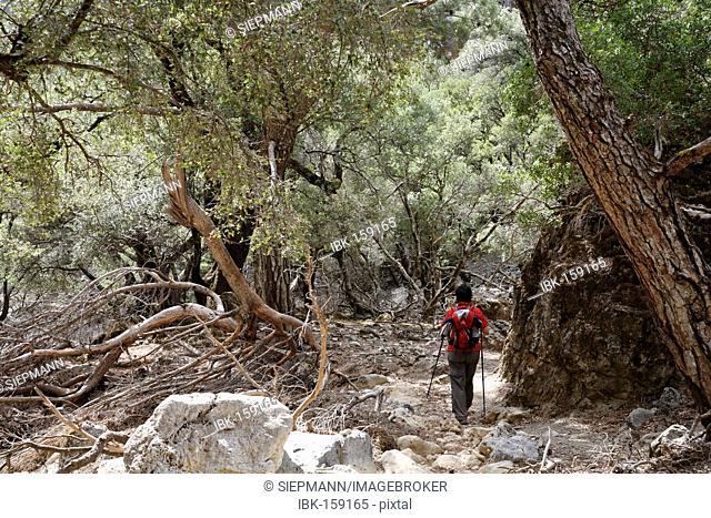 Hiker in Rouvas gorge near Zaros, Ida Mountains, Central Crete, Greece