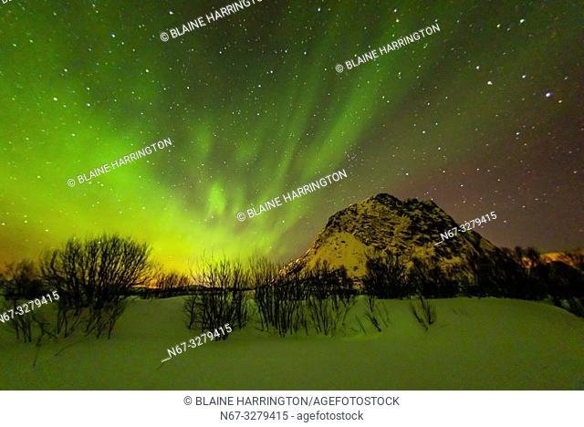 Northern Lights (Aurora Borealis), Gimsoya Island, Lofoten Islands, Arctic, Northern Norway