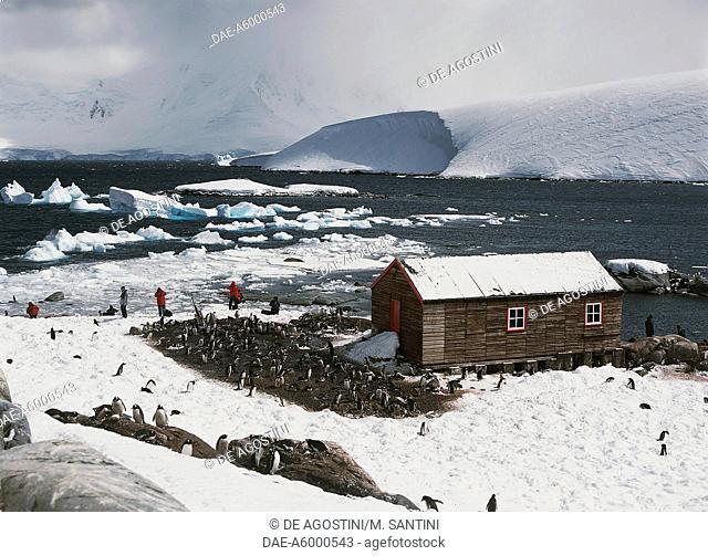 Penguins around the old British base of Port Lockroy, Goudier Island, Antarctic Peninsula, Antarctica
